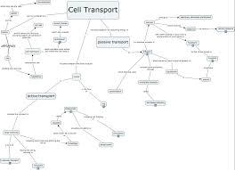 Cell Reproduction Concept Map Answers Cellular Concept Ins Ssrenterprises Co