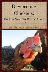 675 best chickens images on pinterest raising chickens backyard