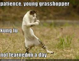 Meme Kung Fu - patience young grasshopper kung fu not learned in a day