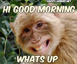 Funny Monkey Memes - 8 good morning wishes with monkey images happy wishes