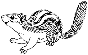 free chipmunk coloring pages