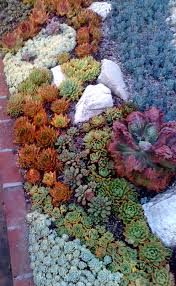 Rock Garden Succulents Look At All Those And Hens Great Gardens Ideas