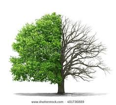 concept doubleness dead tree on one stock photo 401736889