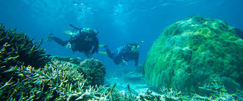 Delaware snorkeling images Great barrier reef scuba diving and snorkelling heron island jpg
