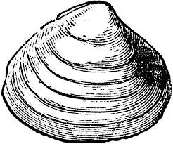 shell clipart line drawing pencil and in color shell clipart
