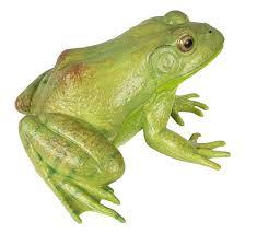 amazon com safari ltd incredible creatures american bullfrog