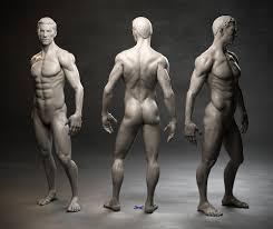 Human Anatomy Male Artstation Male Anatomy Study Sampo Rask
