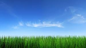 grass of high quality pictures free stock photos