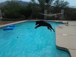 Pool Designs And Prices by When It Is 110 Degrees U2013 Dogs Go Swimming Best Dog Pictures U2013 Tjs