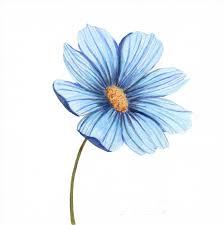 blue flower blue flower watercolor study angela faustina