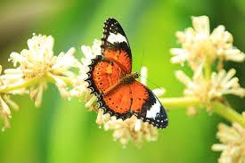 friday fact 24 facts about butterflies australian