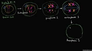 sexual life cycles article meiosis khan academy