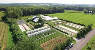 market gardening how to make a living on 1 5 acres organic