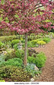 Profusion Flowering Crabapple - profusion crabapple tree stock photos u0026 profusion crabapple tree