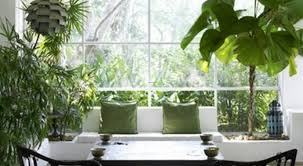plants for office plant good plants for office miraculous best plants for office