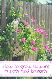 166 best gardening images on pinterest plant oklahoma and yards