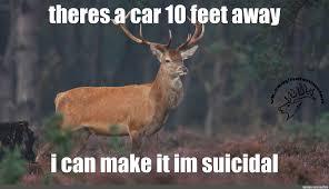 Deer Meme - create meme naive deer v3 animal deer meme naive deer wildlife