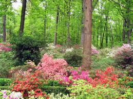 shade loving flowering plants for a woodland garden dengarden