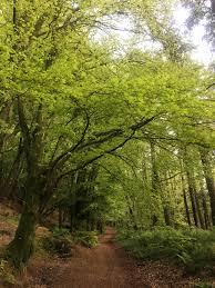 forest glade parking