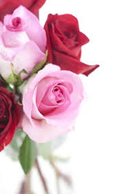 Long Stem Rose Vase Valentines Day Half Dozen Long Stemmed Red Pink Roses Vase