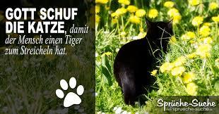 trauersprüche katze katze tiger spruch sprüche suche