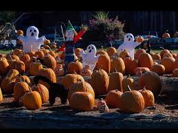 free halloween background 1024x768 pumpkins wallpapers for desktop group 67