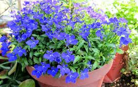 pretty wallpapers for desktop flowers pretty flowers lovely blue flower wallpaper hd for