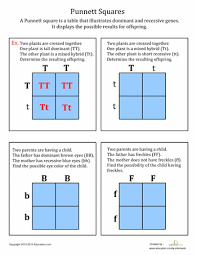 punnett squares worksheets fifth grade and squares