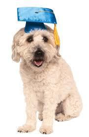 dog graduation cap and gown graduation cap gown teddy clothes fit 14