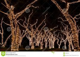 festive lights on trees royalty free stock photos image 3836958