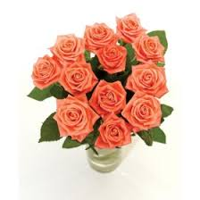 Meaning Of Pink Roses Flowers - buy pink roses meaning of pink roses send pink roses by post a