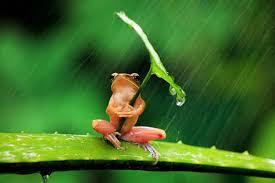 imagenes lindas naturaleza fotos hermosos animales y sus paraguas http goo gl qrrcc9 estas