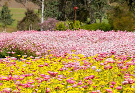 The Australian Botanic Garden Display At The Australian Botanic Gardens Broadsheet