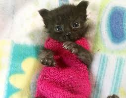 sweaters for cats kitten wears sock sweaters to help heal petcha