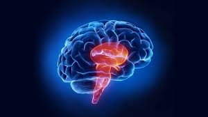 Cortical Blindness May Result From The Destruction Of When Stroke Affects The Brain Stem Stroke Connection Magazine