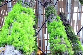 Vertical Gardens Miami - vertical garden provide inspiration for aquascapes okeanos