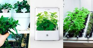 5 best hydroponics kits to grow your indoor herb garden all year long