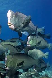 572 best sea life images on pinterest animals ocean life and nature