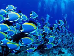 sea life wallpaper wallpapersafari