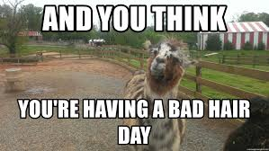 Bad Hair Day Meme - and you think you re having a bad hair day cool llama meme generator