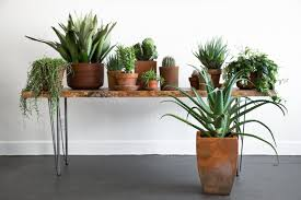 Indoor Plants by Rent A Houseplant The Plant Library Delivers Gardenista