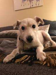 pet of the week ty reston now