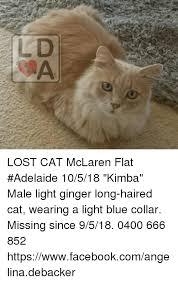 Lost Cat Meme - ld lost cat mclaren flat adelaide 10518 kimba male light ginger