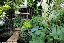 Tropical Plants Pictures - man creates exotic paradise garden with banana plants and palm