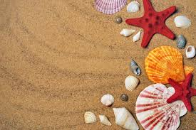 assorted seashells hd wallpaper wallpaper flare