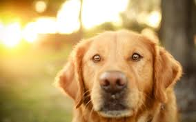 dog wallpapers page 11