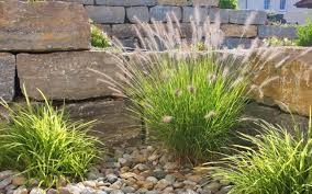 Pflanzen Fur Japanischen Garten Beratung U0026 Planung Ihres Gartens Hain U2022 Lebensraum Garten