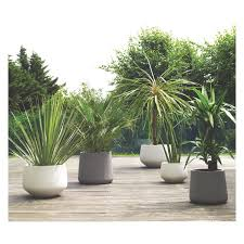 189 best planter images on pinterest pots landscaping and gardening