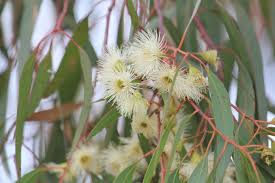 buy australian native plants why attract wildlife nature works garden care