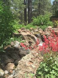 backyard waterfeature with coral bells flagstaff native plant